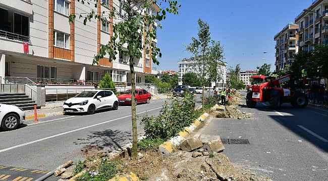 Beylikdüzü'nde vatandaşın seçtiği ağaçlar dikilmeye devam ediyor