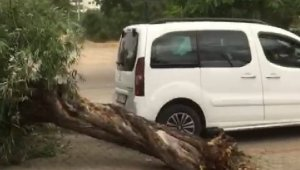 Bingöl'de rüzgar, ağaçları devirdi