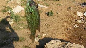Bursa'da gölette yakalanan balık şaşırttı - Bursa Haberleri