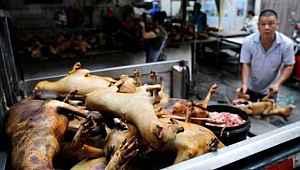 Çin yeni salgınlara davetiye çıkarıyor... Köpek eti festivali başladı