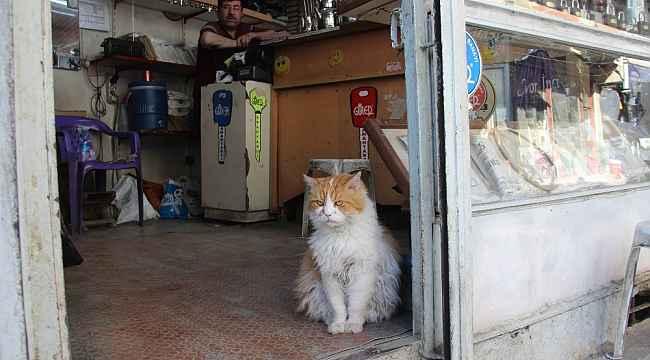 Depresyona giren kedi 9 kiloya ulaştı, gündüzleri de 8 saat uyumaya başladı