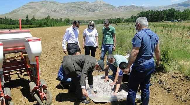 Doğanşehir'de Kuru Fasulye yaygınlaştırılıyor