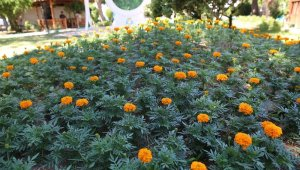 Haliliye'de parklar çiçeklerle donatılıyor