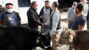 Hayvan pazarında bildik görüntüler