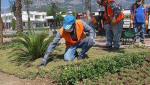 Kemer meydanına 33 bin bitki dikildi