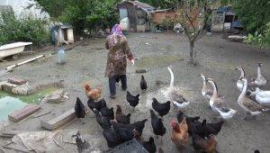 Kümesteki yumurtaları yiyen kargaya güldüren tembih