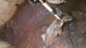 Kuyuya düşen tilkiyi itfaiye kurtardı
