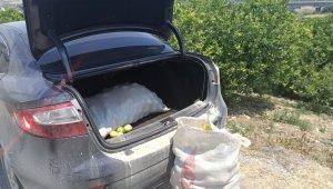 Limon ve motosiklet hırsızları yakalandı