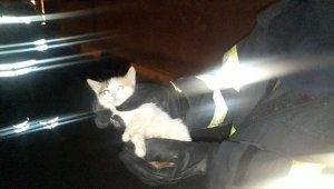 Logara düşen yavru kedi uzun uğraşlar sonucunda kurtarıldı