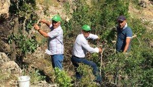 Malatya'da antepfıstığı yaygınlaşıyor