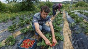 Nilüfer'de meyve bahçeleri çoğalacak - Bursa Haberleri