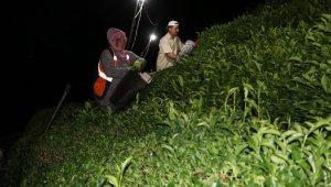 Sıcak hava ve nemden bunalan Rizeliler çareyi çayı akşam toplamakta buldu