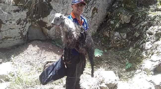Tokat'ta kayalıklarda mahsur kalan kuzu ekiplerince kurtarıldı
