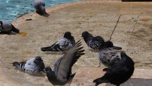 Adana'da sıcak hava vatandaşları da hayvanları da bunalttı