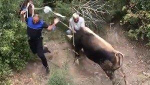 Amasya'da kaçan kurbanlıklar vatandaşa alanı dar etti