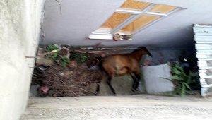Apartman boşluğuna düşen atı itfaiye kurtardı