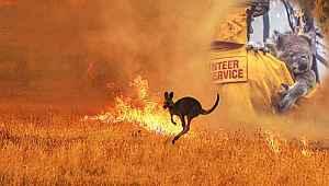 Avustralya yangınlarında acı bilanço: 3 milyar hayvan öldü