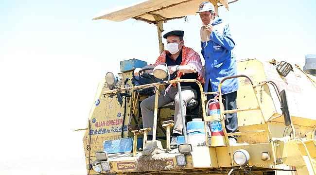 Başkan Böcek biçerdöverin direksiyonuna geçip hasat sevincine ortak oldu