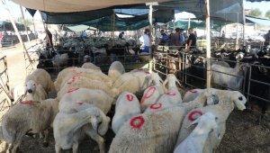 Bayramın 1'inci gününde kurban pazarında yoğunluk