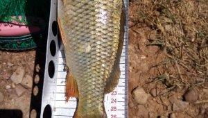 Beyşehir Gölünde boy limiti altında balık avlanmasına ceza