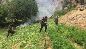 Bingöl'de narko terör operasyonu: 7 milyon kenevir ele geçirildi, 8 gözaltı