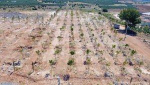 Bulgurca'ya yeni orman alanı