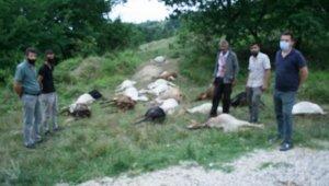 Bursa Yenişehir'de hayvan katliamı - Bursa Haberleri