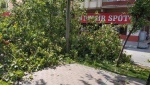 Bursa'da tarihi çınar devrildi - Bursa Haberleri