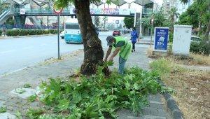Büyükşehir Belediyesi, kenti daha da güzelleştirmek için yeni ekipler kurdu