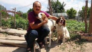 Çanakkale'de köpeklere eziyet iddiası asılsız çıktı
