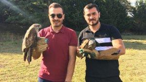 Çekmeköy'de tedavisi tamamlanan 6 şahin doğaya salındı