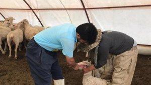 Erzincan'da aşılama çalışmaları devam ediyor