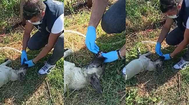 Fedakâr polis, susuzluktan fenalaşan köpeğe elleriyle su içirdi - Bursa Haberleri