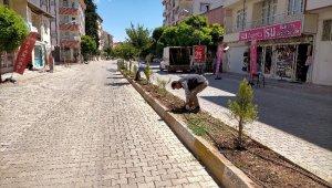 Gölbaşı Belediyesi ağaçlandırma çalışmalarına başladı