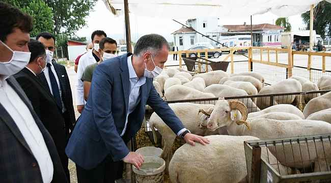 İnegöl'de hayvan pazarında hareketlilik başladı - Bursa Haberleri