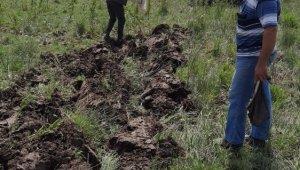 Kaçak avcıların topladığı salepler yeniden toprakla buluştu