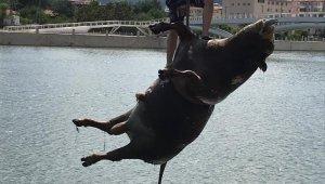 Kızılırmak'taki hayvan leşini vinçle kaldırıldı