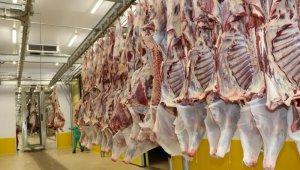 Kocaeli mezbahanelerinde 633 ton et kesildi