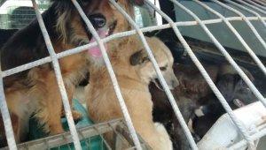 Kötü koşullarda yaşayan 34 köpek koruma altına alındı
