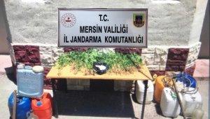 Mersin'de 561 kök kenevir ele geçirildi