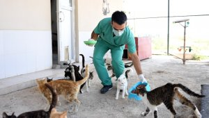 Mersin'de sokak hayvanları aç kalmıyor