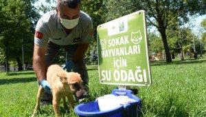 Osmangazi'den can dostlara yardım eli - Bursa Haberleri