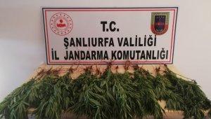 Şanlıurfa'da çok miktarda uyuşturucu ele geçirildi