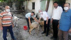 Selde hayvanları telef olan adama koyun ve kuzu hediye etti