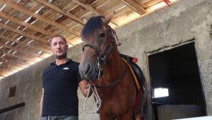 Siirt'te yetiştirilen rahvan atları sıfır araba fiyatına satılıyor