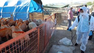 Talas'ta kurban hijteink ve temiz ortam