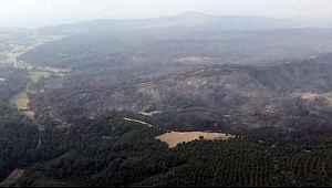 Tarım ve Orman Bakanı'ndan ciğerleri yakan açıklama... Gelibolu'daki yangının bilançosu