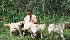 Türkiye'de koronavirüs hayvanseverleri Labrador ve Poodle cinsine yöneltti - Bursa Haberleri