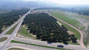 Türkiye'nin ilk gıda ihtisas organize sanayi bölgesi Ayvalık'ta kuruluyor