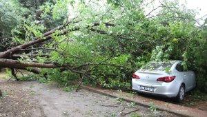 Yarım saat arayla ikinci ağaç devrildi